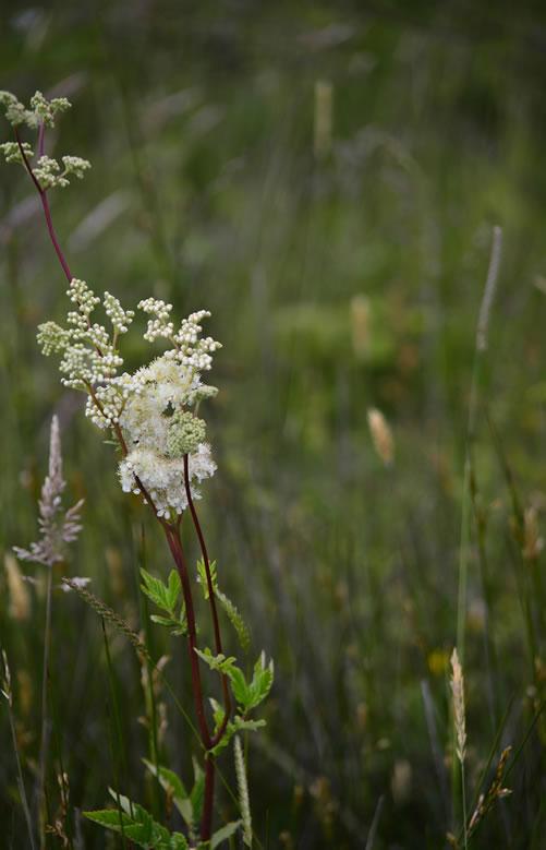 Dawlish Warren Nature Reserve