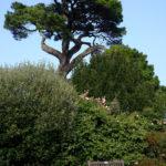 Manor House Gardens 3 By John Hooper